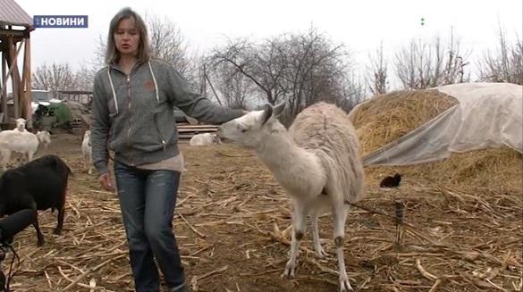 На Черкащині дресирувальники створили зоопарк з колишніх циркових тварин (ВІДЕО)