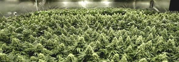 Черкащанина засудили за зберігання наркотиків в особливо великих розмірах