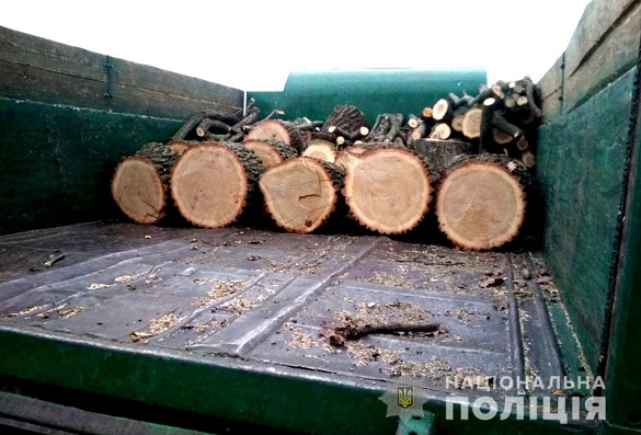 Невідомі на Черкащині знищували ліс (ФОТО, ВІДЕО)