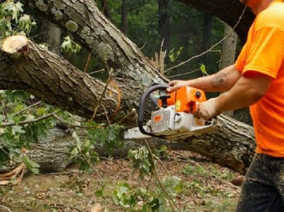 Двоє чоловіків на Черкащині незаконно вирубували ліс