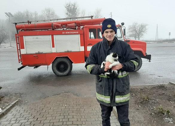 На Черкащині врятували з дерева кота (ФОТО)