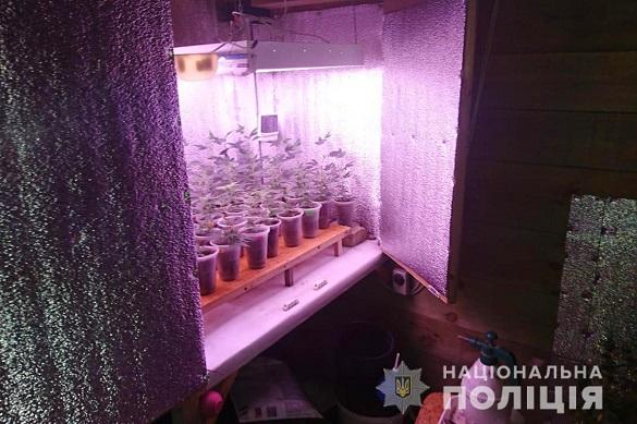 На території Черкаської області група осіб вирощували та збували наркотики (ФОТО)