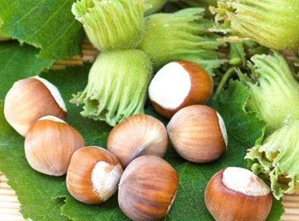 Житель Черкащини створив власну справу на вирощуванні ліщини (ВІДЕО)