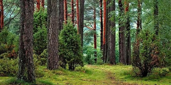 Підприємець на Черкащині взяв у довгострокове користування ліси