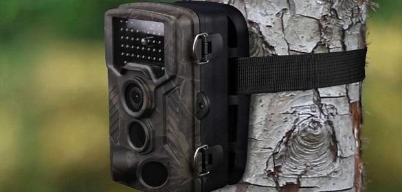 Фотопастки на Черкащині зафіксували групку лісових мешканців (ВІДЕО)