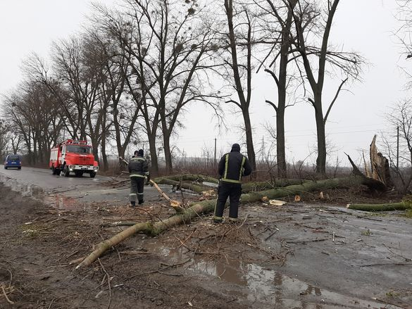 На Черкащині внаслідок негоди на дорогу впали дерева (ФОТО)