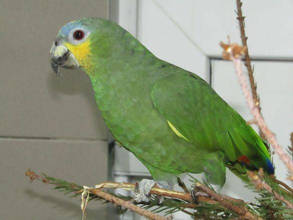 У черкаському зоопарку з'явились нові крилаті мешканці (ФОТО)