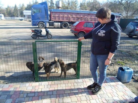 У Катеринополі серед білого дня застрелили собаку