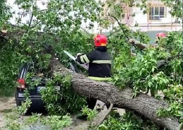 У Черкасах дерево впало на припаркований автомобіль (ФОТО)