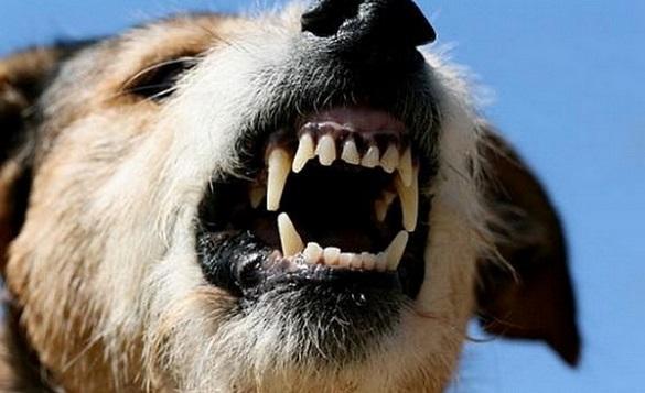 Скаженого пса виявили у Черкасах