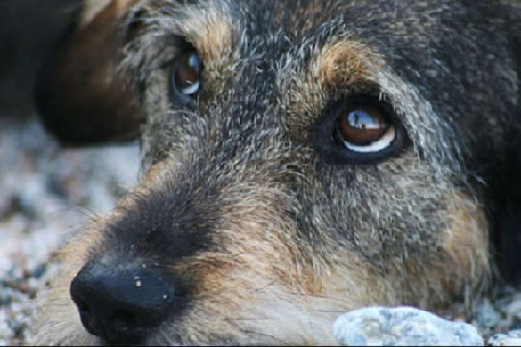 За жорстоке вбивство собаки черкащанин отримав умовну судимість (ДОКУМЕНТ)