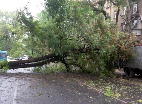 Через негоду на Черкащині повалило дерева (ВІДЕО)