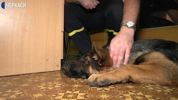 На роботу - з собакою: черкасці долучились до Всесвітньої акції (ВІДЕО)