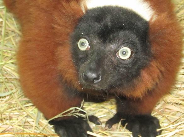 У черкаському зоопарку з'явилися нові мешканці (ФОТО)
