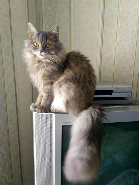 У Черкасах шукають кішку, яка загубилася (ФОТО)