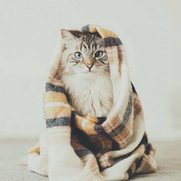 Завтра на Черкащині буде прохолодно