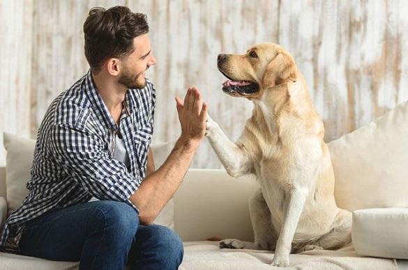 У Раді пропонують штрафувати власників тварин, які не прибирають за домашніми улюбленцями