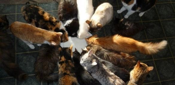 Неподалік Черкас в одному будинку живуть півсотні котів (ФОТО), фото-1