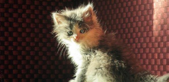 Неподалік Черкас в одному будинку живуть півсотні котів (ФОТО), фото-2