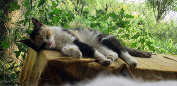 Неподалік Черкас в одному будинку живуть півсотні котів (ФОТО), фото-3