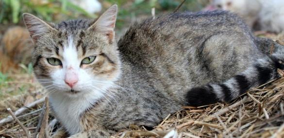 Неподалік Черкас в одному будинку живуть півсотні котів (ФОТО), фото-4